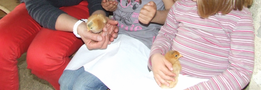 cropped-poussins-1.png